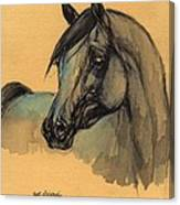 The Grey Arabian Horse 1 Canvas Print