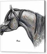 The Grey Arabian Horse 11 Canvas Print