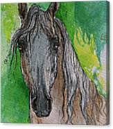 The Grey Arabian Horse 17 Canvas Print