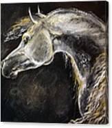 The Grey Arabian Horse 9 Canvas Print
