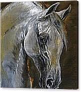The Grey Arabian Horse Oil Painting Canvas Print