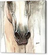 The Grey Horse Portrait 2014 02 10 Canvas Print