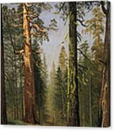 The Grizzly Giant Sequoia Mariposa Grove California Canvas Print
