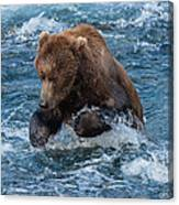 The Grizzly Plunge Canvas Print
