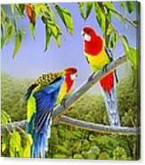 The Happy Couple - Eastern Rosellas  Canvas Print
