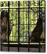 The Hawks From The Series The Imprint Of Man In Nature Canvas Print