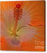 The Heart Of A Hibiscus Canvas Print