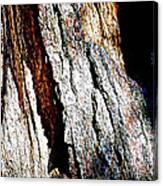 The Heart Of Barkness In Mariposa Grove In Yosemite National Park-california  Canvas Print