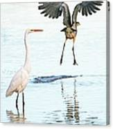 The Heron With The Bird Face Butt. Canvas Print