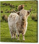The Highland Dude Canvas Print