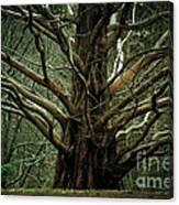 The Hobbit Tree Canvas Print