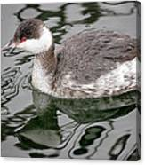 The Horned Grebe Canvas Print