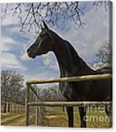 The Horse Trainer Canvas Print