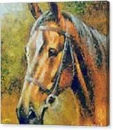 The Horse's Head Canvas Print