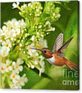 The Hummer And The Butterfly Bush Canvas Print