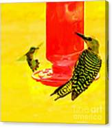 The Humming Bird And Gila Woodpecker Canvas Print