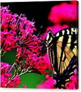 The Hungry Butterfly Canvas Print