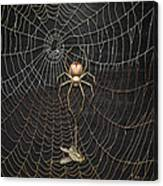 The Hunter And Its Pray - A Gold Fly Caught By A Gold Spider Canvas Print