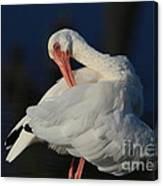 The Ibis Preen Canvas Print