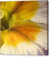 The Inner Circle Of A Primrose Canvas Print