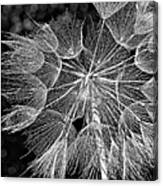 The Inner Weed Monochrome Canvas Print