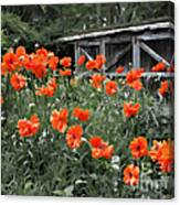 The Inspiration Of Orange Poppies Canvas Print