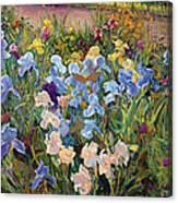 The Iris Bed Canvas Print