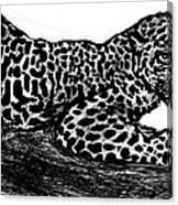 The Jaguar  Canvas Print