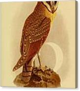 The Java Owl Cassell Canvas Print