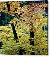 The Joy Of Being In Autumn Canvas Print