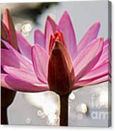 The Joyous Lily Canvas Print