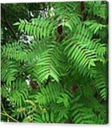 The Jutting Sumac Canopy Hungers For Light Canvas Print