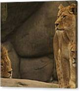 The King And His Queens Canvas Print