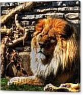 The King Lazy Boy At The Buffalo Zoo Canvas Print