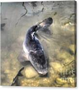 The King Of The Pond Canvas Print