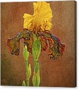 The Kings Prize Iris Canvas Print