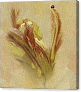 The Lady And The Parrot Tulip Canvas Print