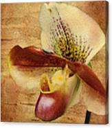 The Lady Slipper Orchid Canvas Print