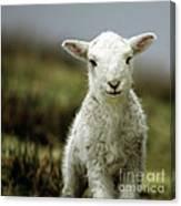 The Lamb Canvas Print