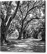 The Lane Bw Canvas Print