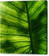 The Leaf Canvas Print