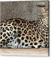 The Leopard Canvas Print