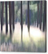 The Light Of The Forest Canvas Print
