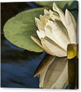 The Lily Canvas Print