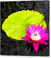 The Lily Pad And Flower... Canvas Print