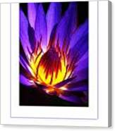 The Lily Poster Canvas Print