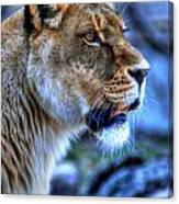 The Lioness Alert Canvas Print