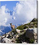 The Little Ibex Canvas Print