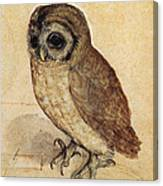 The Little Owl 1508 Canvas Print