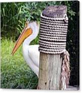 The Lone Pelican Canvas Print
